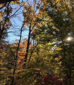 Fall Trees and Sunshine