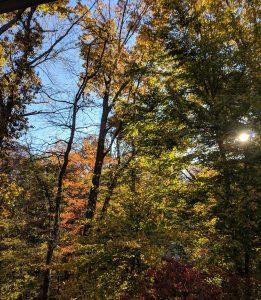 Fall Trees and Sunshine