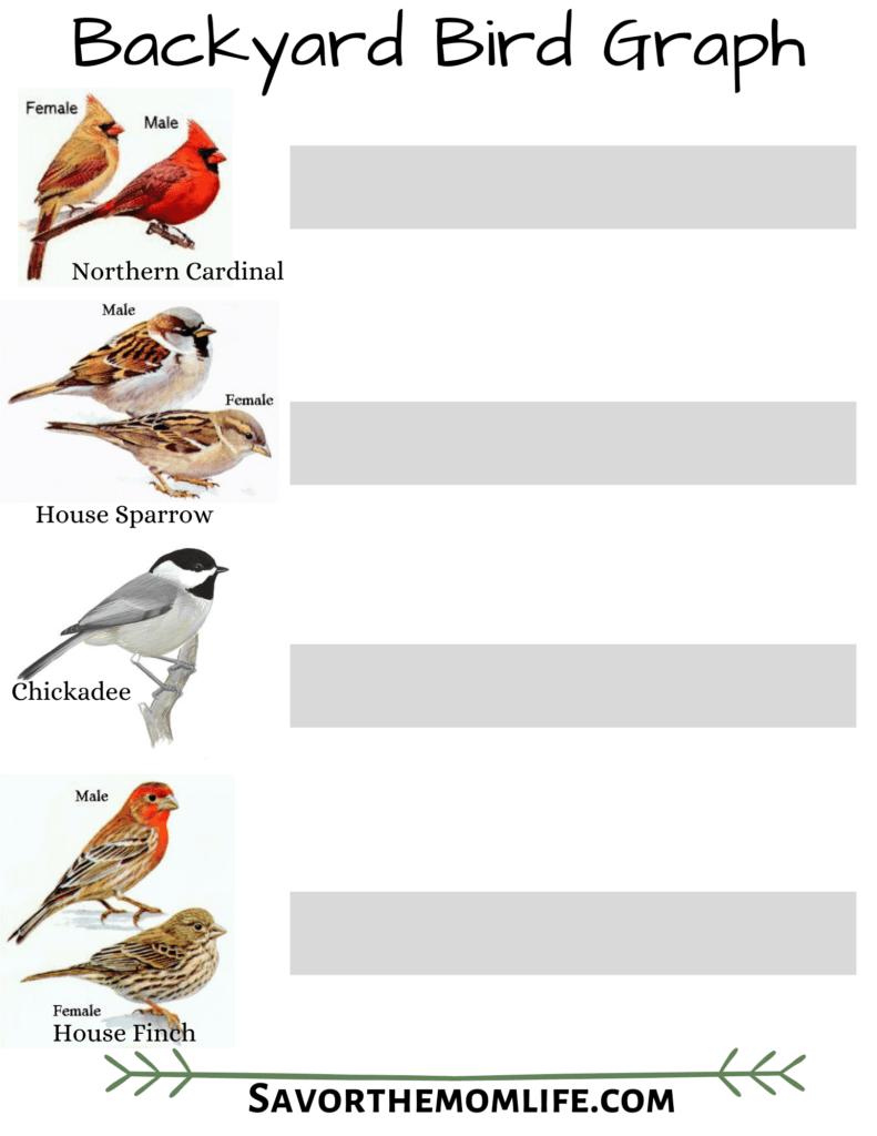 Backyard Bird Graph